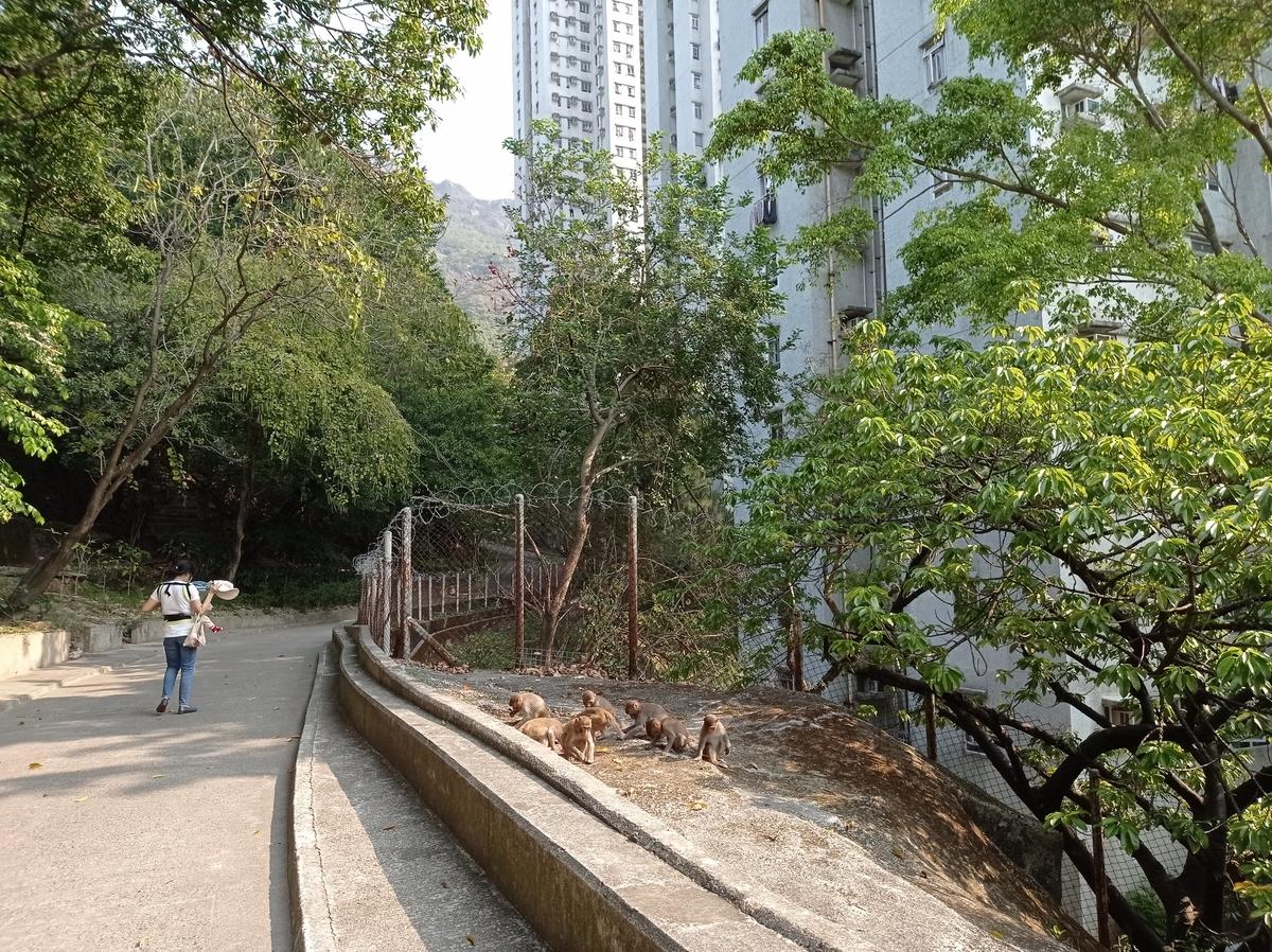 f:id:hongkonghongkong:20210401132344j:plain