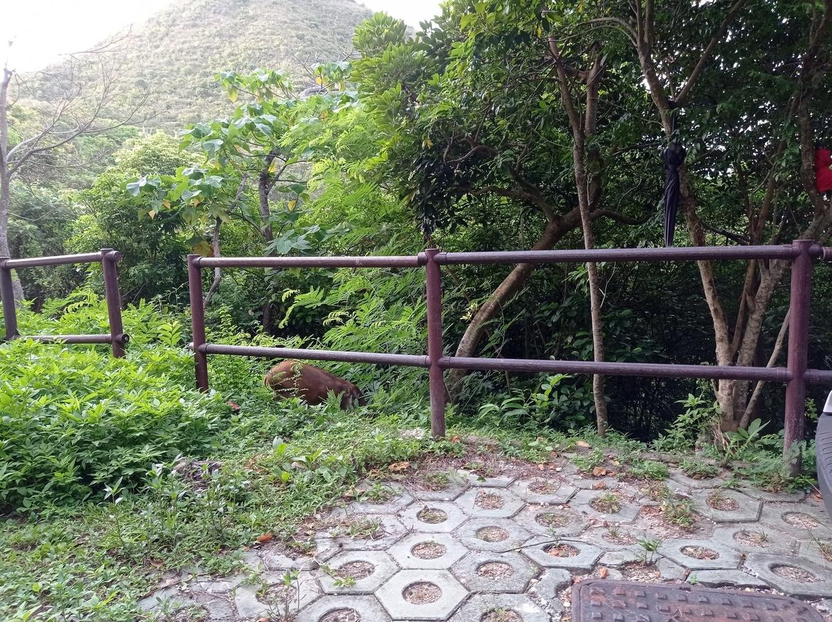 f:id:hongkonghongkong:20210717155848j:plain