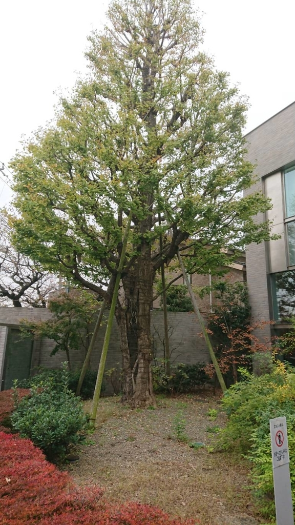 f:id:hongo-ueno-realestate:20181122184820j:plain
