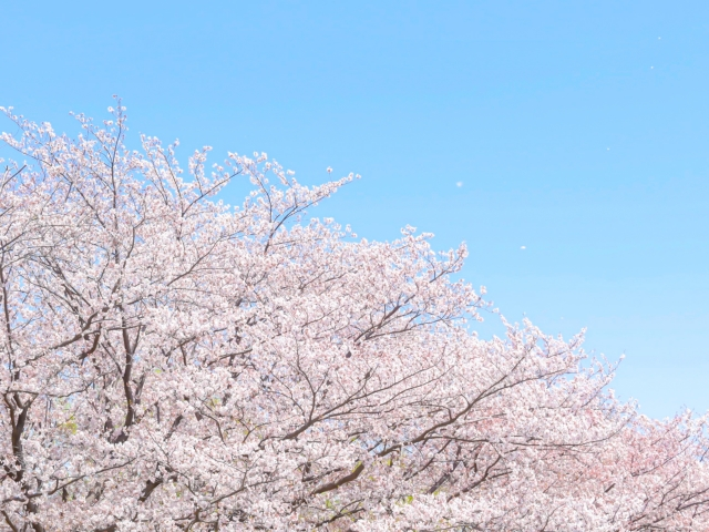 f:id:honno-yokomichi:20200327232315j:plain