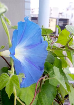 f:id:honokasha:20100925114603j:image