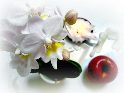 f:id:honokasha:20110413174726j:image