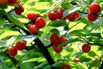 f:id:honokasha:20110530012558j:image