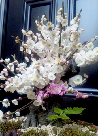 f:id:honokasha:20120327113732j:image