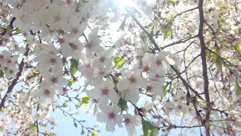 f:id:honokasha:20120412132542j:image