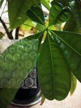 f:id:honokasha:20120627144519j:image