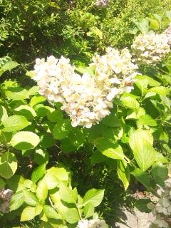 f:id:honokasha:20120718100626j:image