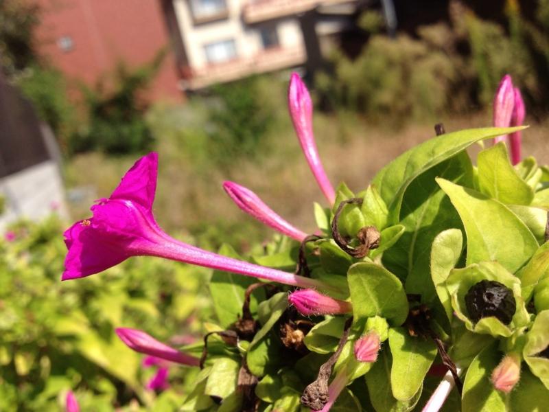 f:id:honokasha:20121016235838j:image:w360