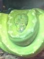 f:id:honokasha:20130113145552j:image:medium