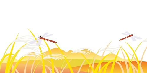 秋の草と赤とんぼ