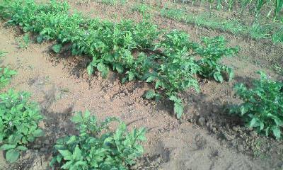 f:id:honyarara-farm:20130603221356j:image