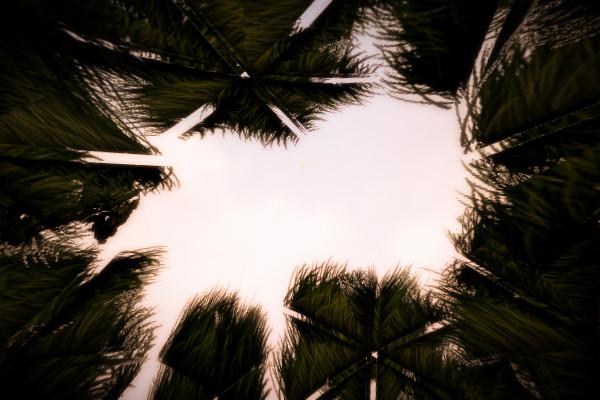 京都府八幡市のやばい竹薮から見上げた空