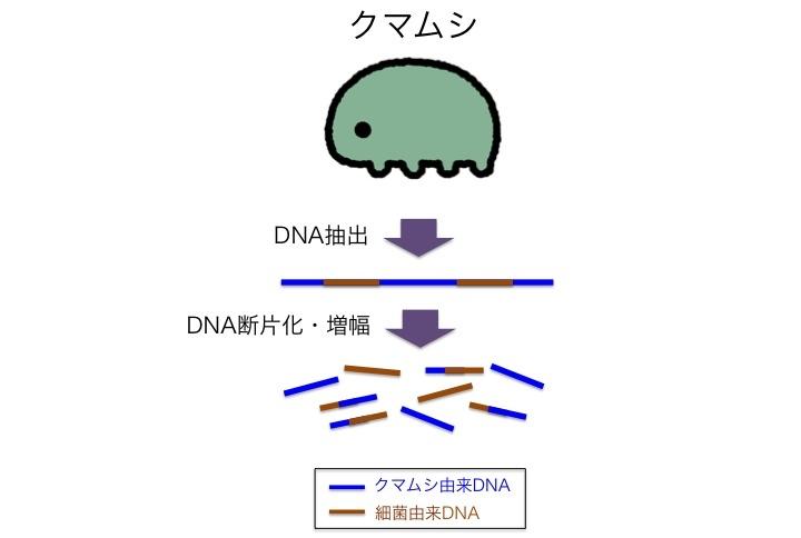 f:id:horikawad:20151211164249j:plain