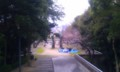 [twitter] 比治山到着。桜もぼちぼち咲いてて賑やかだぁ!