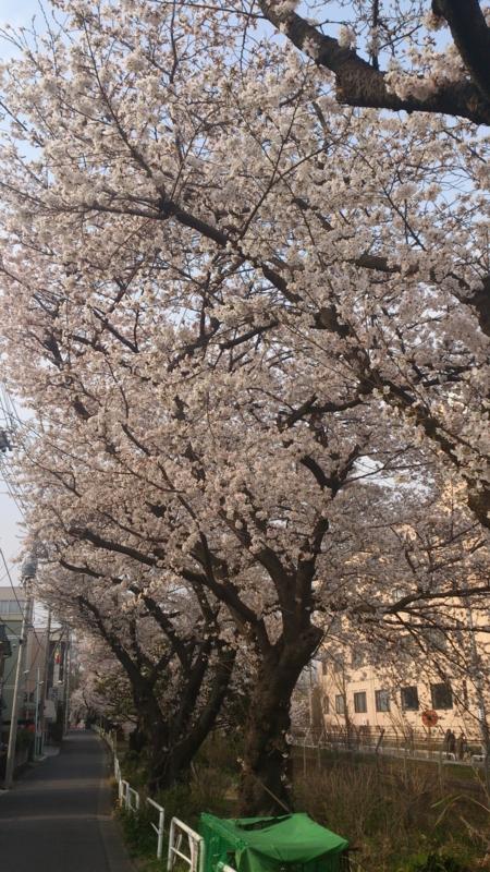 f:id:horinouchi1:20130324151121j:image