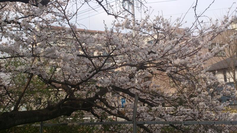 f:id:horinouchi1:20130324151312j:image