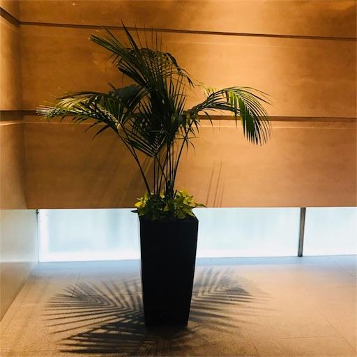 f:id:horitsukiko:20180712190510j:plain
