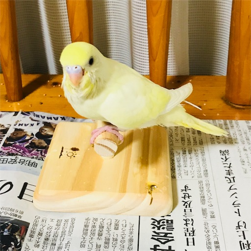 f:id:horitsukiko:20180822195032j:image