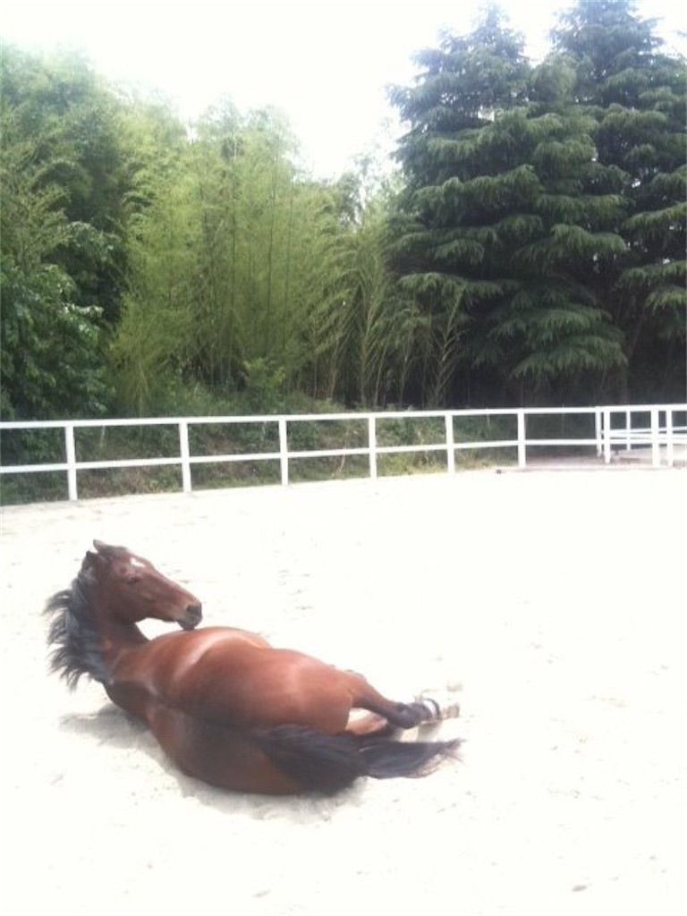 f:id:horseball:20200419120306j:image