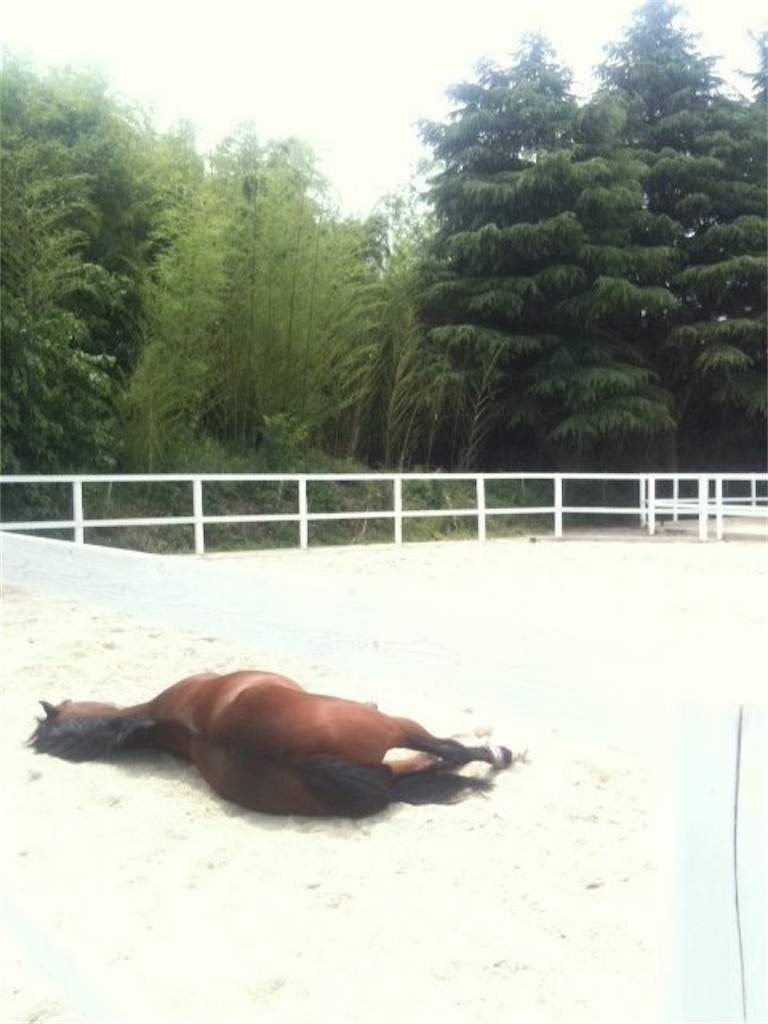 f:id:horseball:20200419120309j:image