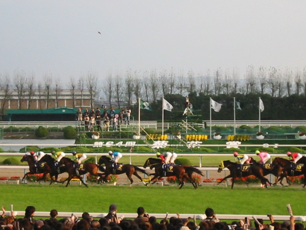 f:id:horseracinglovers:20190309191925j:plain