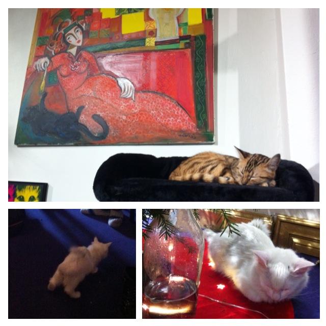 タンペレの猫カフェにて