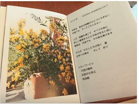 f:id:hoshi-no-shizuku-rokko:20170125215227j:plain