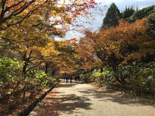 f:id:hoshi-no-shizuku-rokko:20170126074432j:image