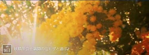 0309mimoza.jpg