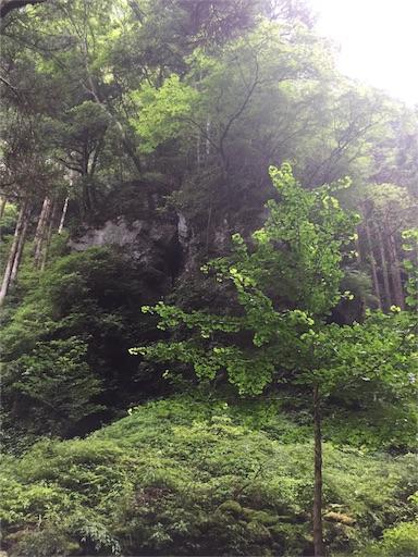 f:id:hoshi-no-shizuku-rokko:20170726102805j:image