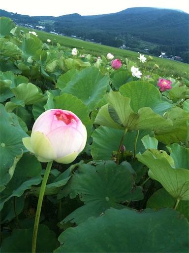 f:id:hoshi-no-shizuku-rokko:20170801143959j:image