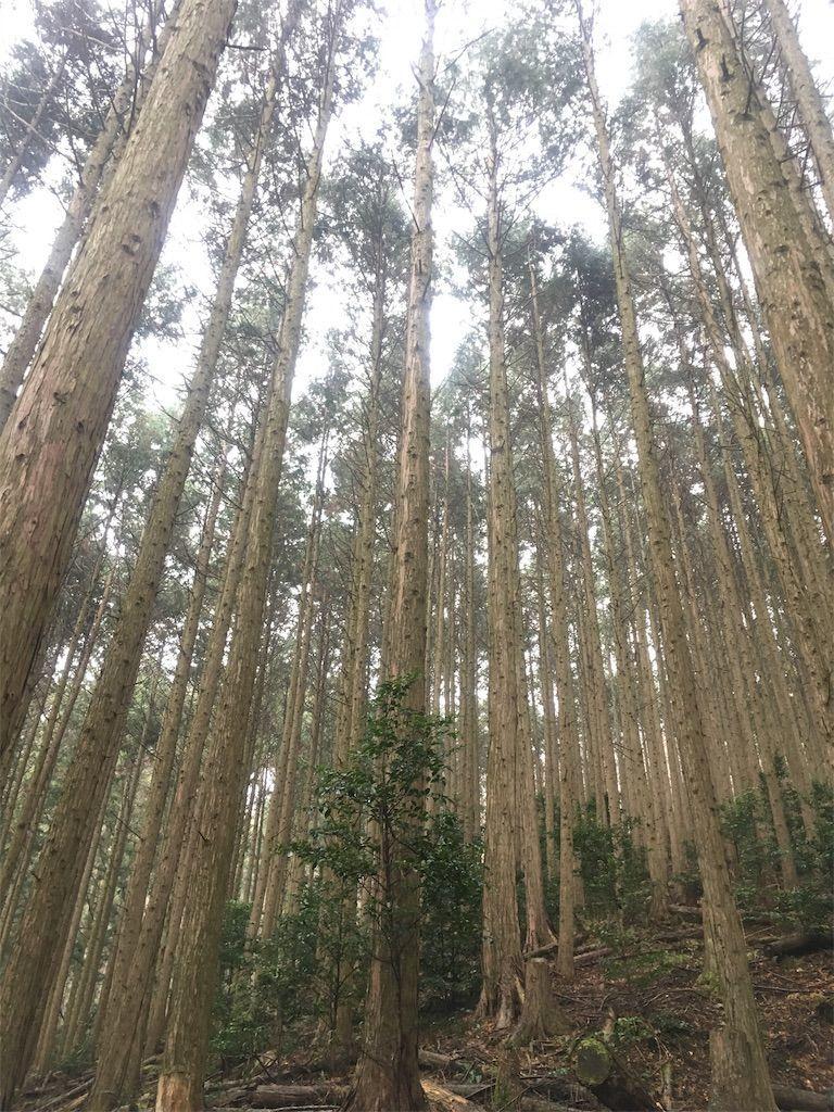 f:id:hoshi-no-shizuku-rokko:20181221092542j:image