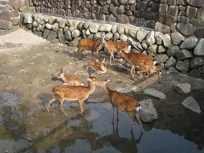 f:id:hoshi_bushi:20110823021701j:image