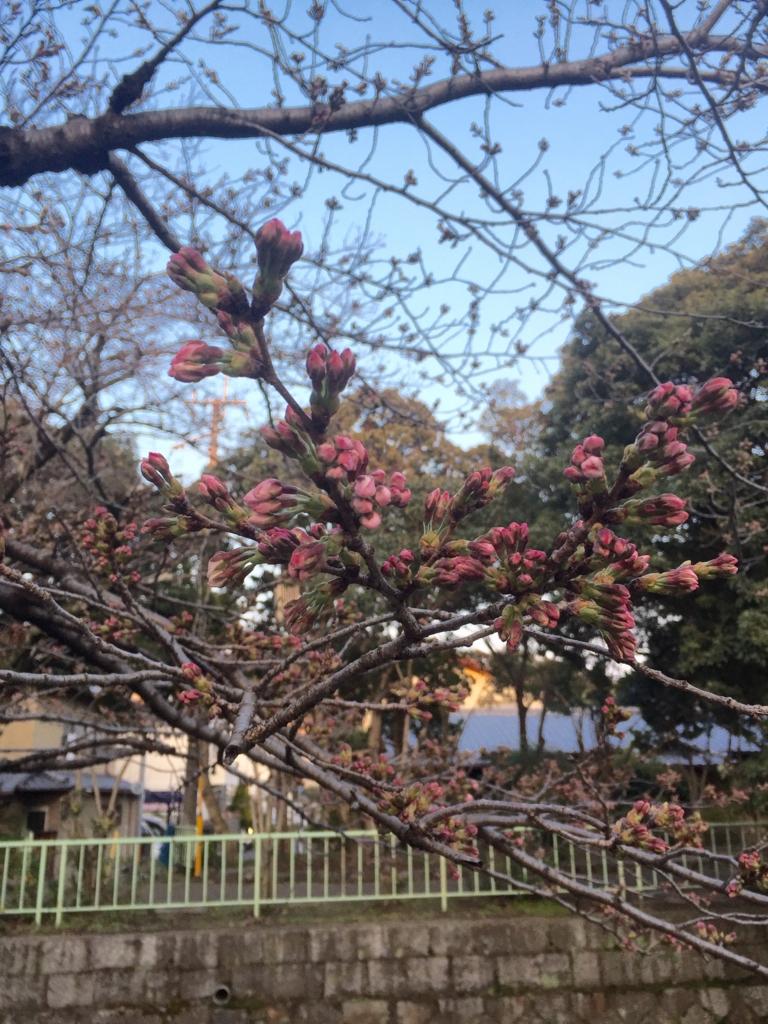 f:id:hoshihanaroma:20170401231924j:plain