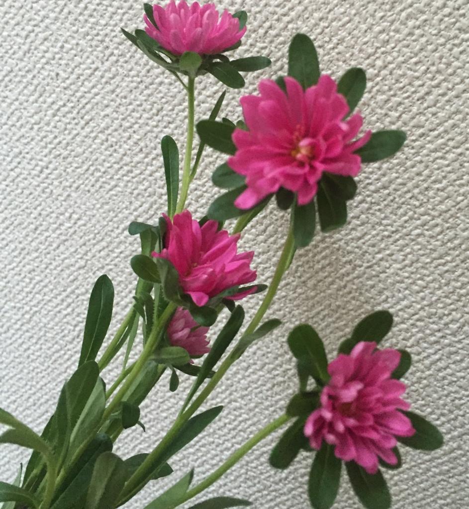 f:id:hoshihanaroma:20170421131334j:plain