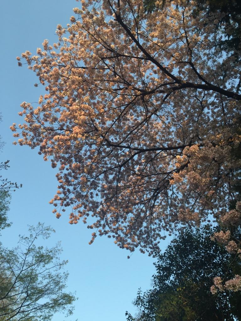 f:id:hoshihanaroma:20170426225745j:plain