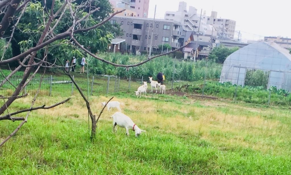 f:id:hoshihanaroma:20180710143753j:plain