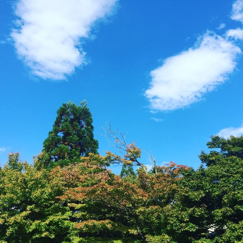 f:id:hoshihanaroma:20181017122545j:plain