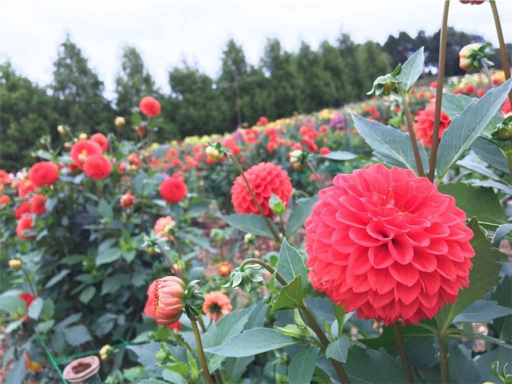 f:id:hoshinogaku:20180322023953j:image
