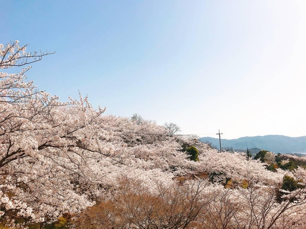 f:id:hoshinogaku:20180331132540j:plain