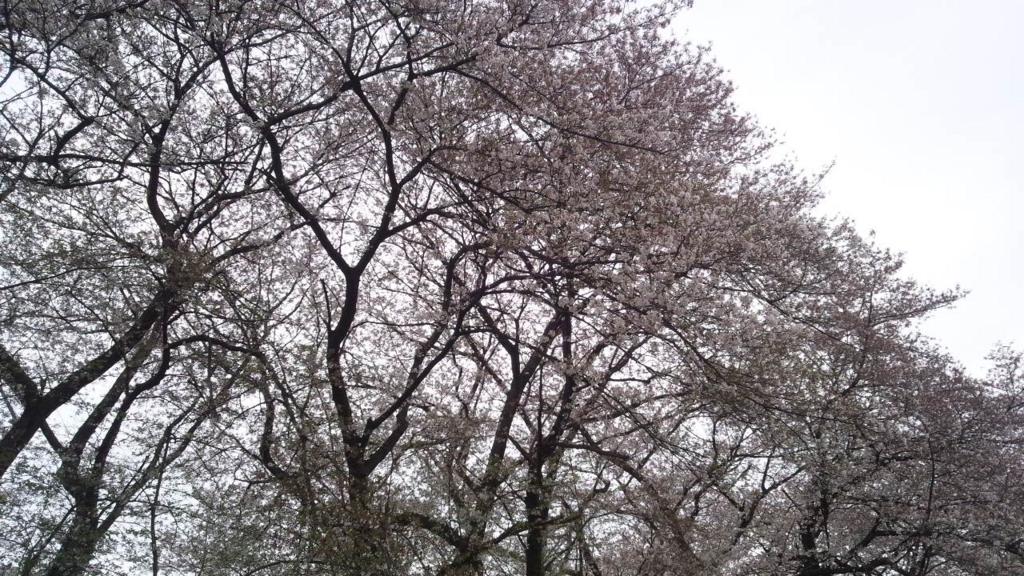 f:id:hoshizukuyo:20160409235548j:plain
