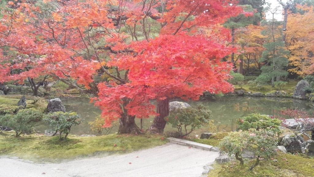 f:id:hoshizukuyo:20171128125617j:plain