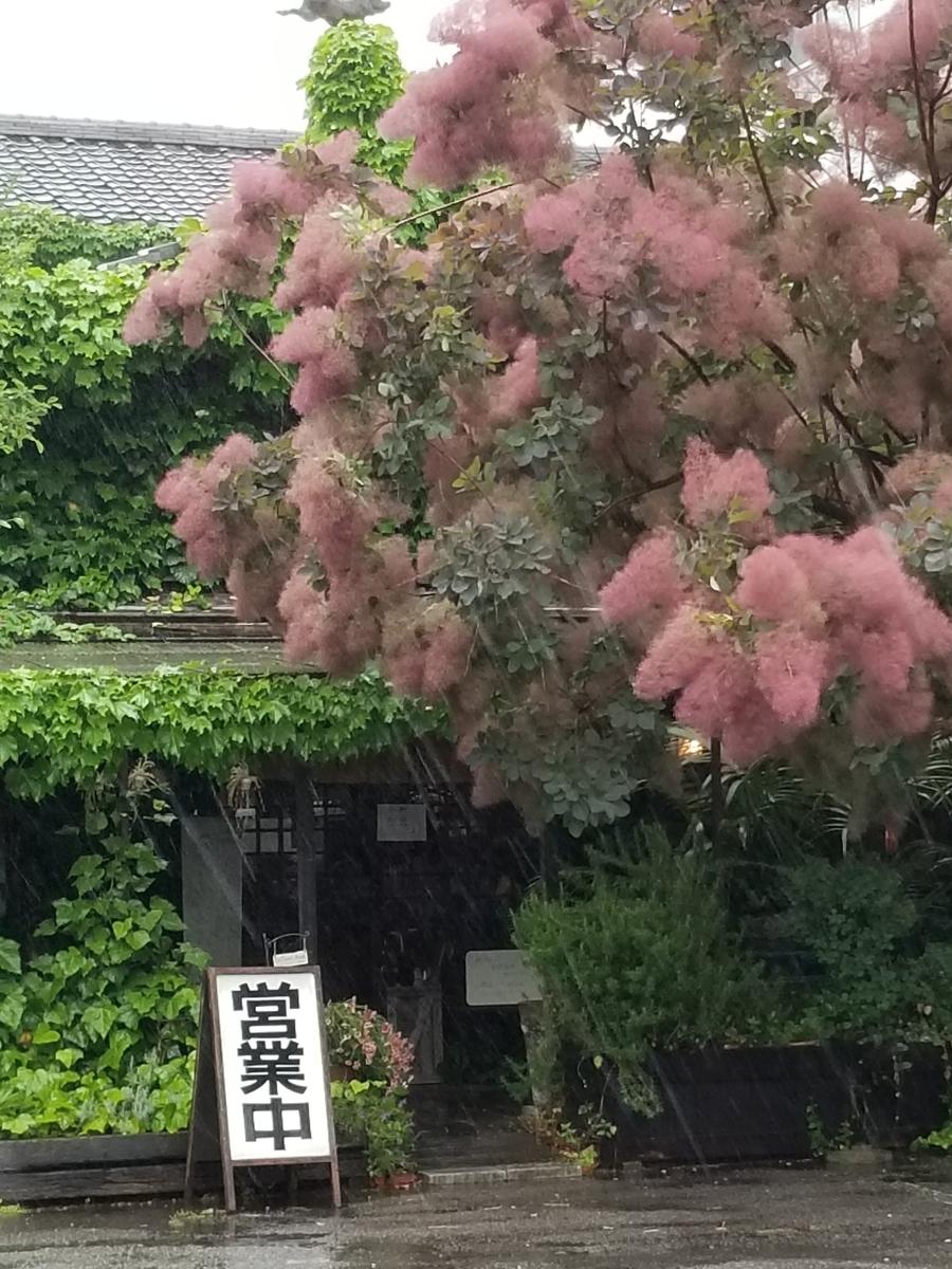 f:id:hoshizukuyo:20190521130229j:plain