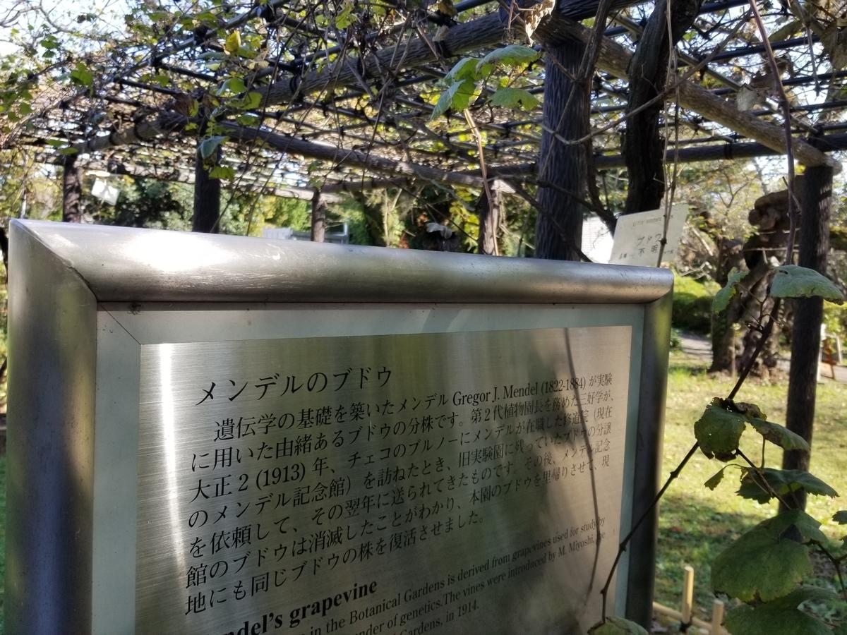 f:id:hoshizukuyo:20201102054916j:plain