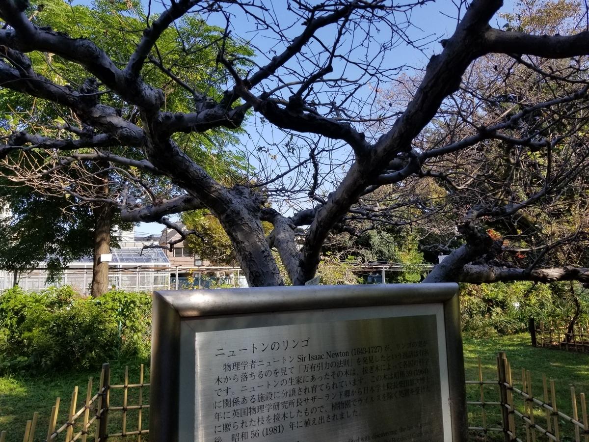 f:id:hoshizukuyo:20201102054935j:plain