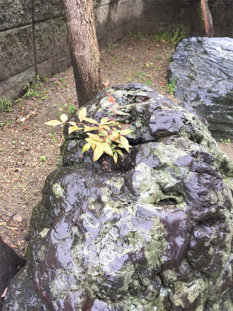 f:id:hosigakiobasan:20170408141312j:image