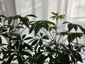 窓際のグリーン
