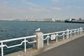 横浜へ帰郷