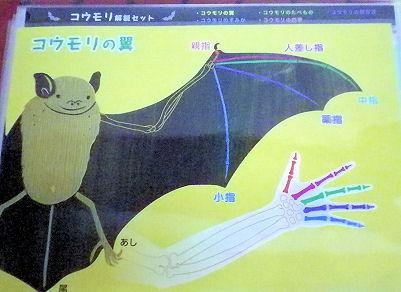 0713_コウモリの翼(手).jpg