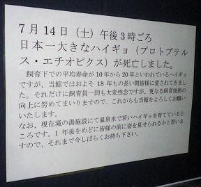 1220_ハイギョその後.jpg